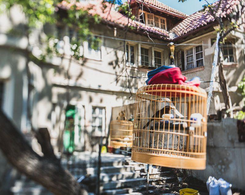 Birds – Tianjin